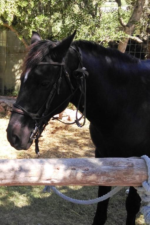 Furia, Son Bou horse