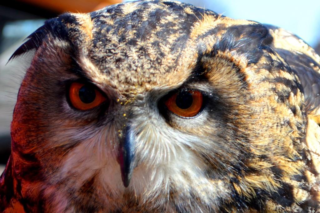 St James City Farm, Gloucester, animals, owl, fatboy