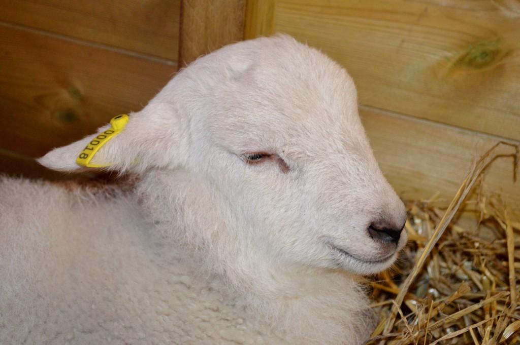St James City Farm, Gloucester, animals