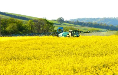 Cotswolds, rapeseed field, Winchcombe, Cheltenham